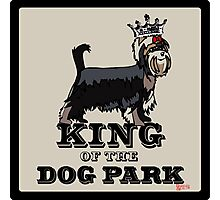 Yorkshire Terrier King of the Dog Park Photographic Print