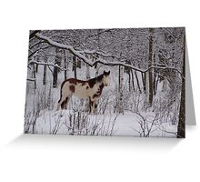 Winter Patterns Greeting Card