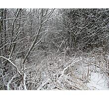 Winter Strikes Photographic Print