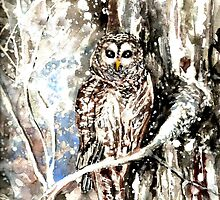 Barred Owl by Hannah Tiffin by HannahTiffinArt