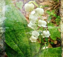 Lily of the Valley - In White #1 by MotherNature