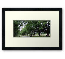 Bovine Avenue - Gostwyck, Northern Tablelands, NSW, Australia Framed Print