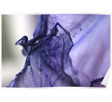 Purple Iris Petal Macro Photography Poster