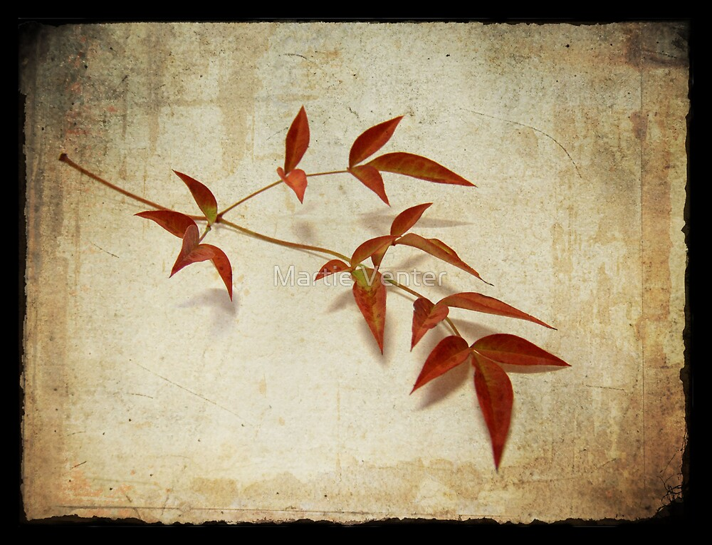 Textures of Autumn II by Martie Venter