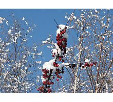 Apples and Snow Photographic Print