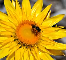 Bee Happy! by Gayle Shaw