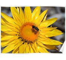 Bee Happy! Poster