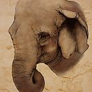 Indian Elephant by Ine Spee