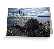 Yellow Dandelion Flowers By The Ocean Greeting Card