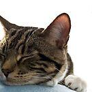Sleeping Cat by dozzie