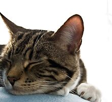 Sleeping Cat by dozzie