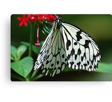 Wings of white Canvas Print