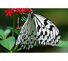 Wings of white Photographic Print