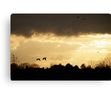 Off to Roost Canvas Print