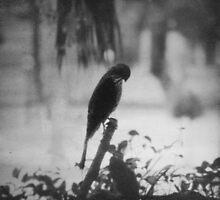 A solitary burden by mibrahim