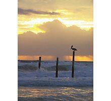 pelican pole Photographic Print