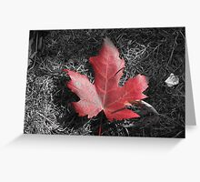 Maple Leaf Greeting Card