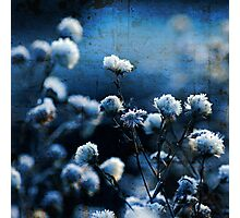 Blue Bokeh Photographic Print