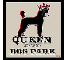 Standard Poodle Queen of the Dog Park Photographic Print