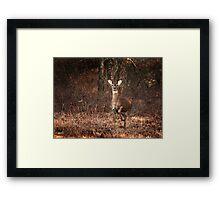 Stomp Framed Print