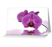Tropical Pink Greeting Card
