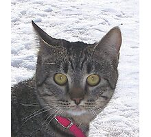 I am the house cat,, why am i out here in this white stuff? Photographic Print
