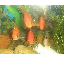 Freaky Fish Photographic Print