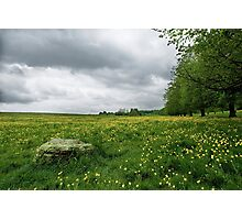 Yellow flower landscape Photographic Print