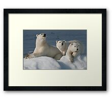 Bears On Ice Framed Print