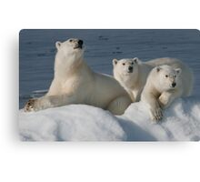 Bears On Ice Canvas Print