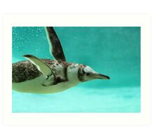 "The Penguin - Fantastic underwater photo of a penguin in ""flight"" Art Print"