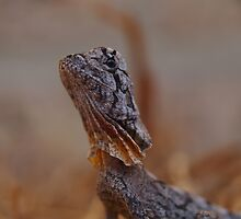 Baby Frilled Neck Lizard by Steve Bullock