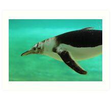 "The Penguin  (2) - Fantastic underwater photo of a penguin in ""flight"" Art Print"