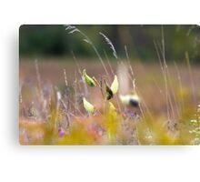 Portrait of a Meadow Canvas Print