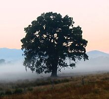 """Awakening' by Jayne Healy"