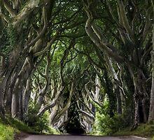 The Dark Hedges - Ireland - Fantastic Print Of Spooky Trees by verypeculiar