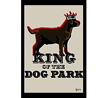 Labrador Retriever King of the Dog Park Photographic Print