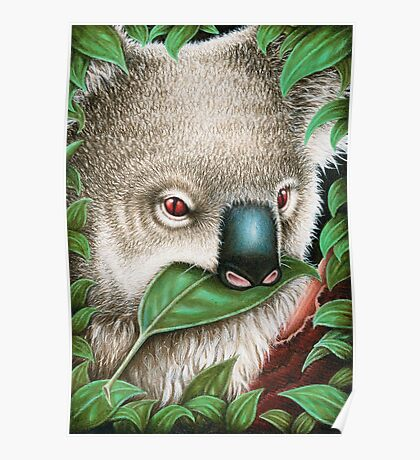 Cute Koala Munching a Leaf Poster