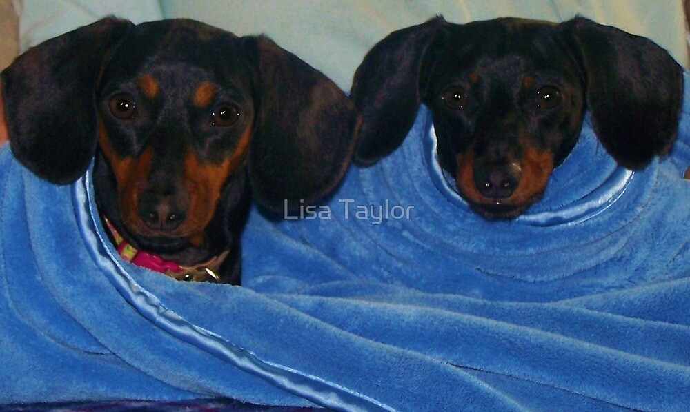 Diddy & Doodles by Lisa Taylor