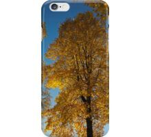 Maple Magnificent   iPhone Case/Skin
