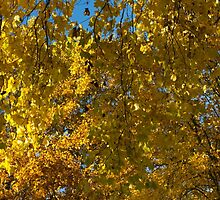Chaos in Gold and Yellow   by Rod Raglin