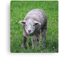 Who are ewe Canvas Print