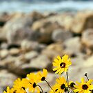 Flower by the Sea by BCinMB