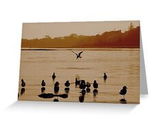 Diving Seagull Greeting Card