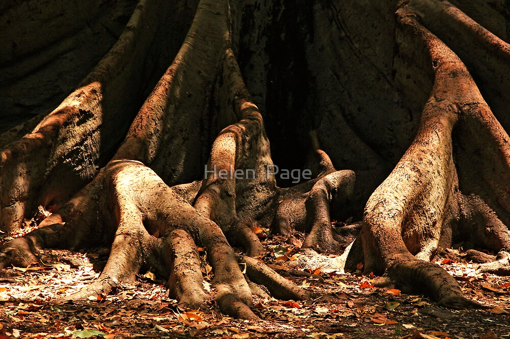 Roots by Helen  Page