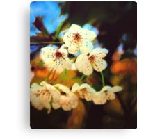 Canvas Blossoms... Canvas Print