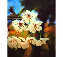 Canvas Blossoms... Photographic Print
