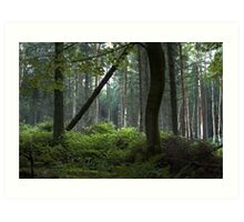 The Dark Forest Print / Irish Dark Forest / Nature / Trees Photo Art Print