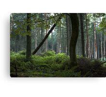 The Dark Forest Print / Irish Dark Forest / Nature / Trees Photo Canvas Print