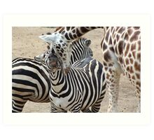 Zebra and Giraffe Photo Print - Animal Photo  Art Print